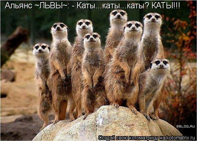 Котоматрица: Альянс ~ЛЬВЫ~: - Каты...каты...каты? КАТЫ!!!