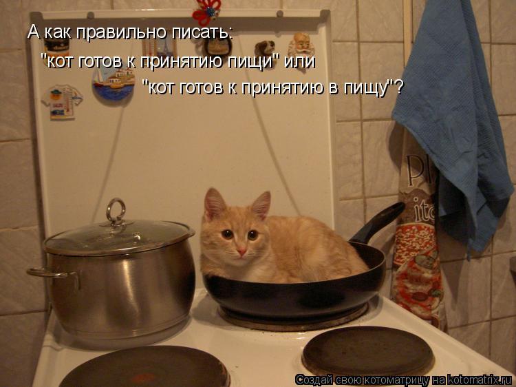 """Котоматрица: А как правильно писать: """"кот готов к принятию пищи"""" или  """"кот готов к принятию в пищу""""?"""