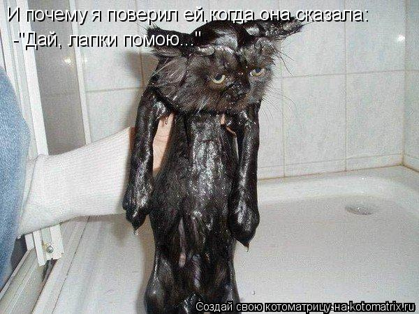 """Котоматрица: И почему я поверил ей,когда она сказала: -""""Дай, лапки помою..."""""""
