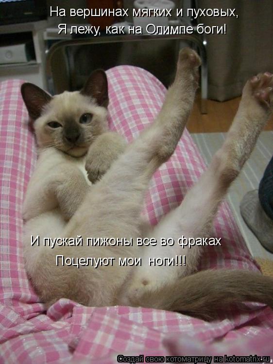 Котоматрица: На вершинах мягких и пуховых,  Я лежу, как на Олимпе боги! И пускай пижоны все во фраках  Поцелуют мои  ноги!!!