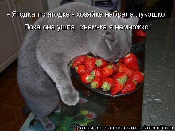 Котоматрица: - Ягодка по ягодке - хозяйка набрала лукошко! Пока она ушла, съем-ка я немножко!