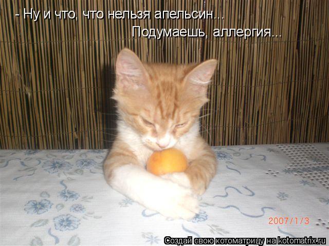 Котоматрица: - Ну и что, что нельзя апельсин... Подумаешь, аллергия...