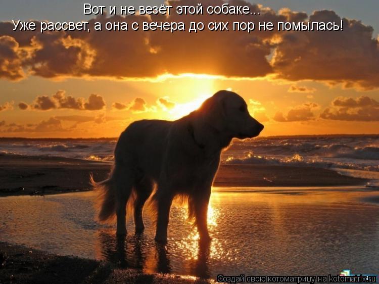 Котоматрица: Вот и не везёт этой собаке... Уже рассвет, а она с вечера до сих пор не помылась!