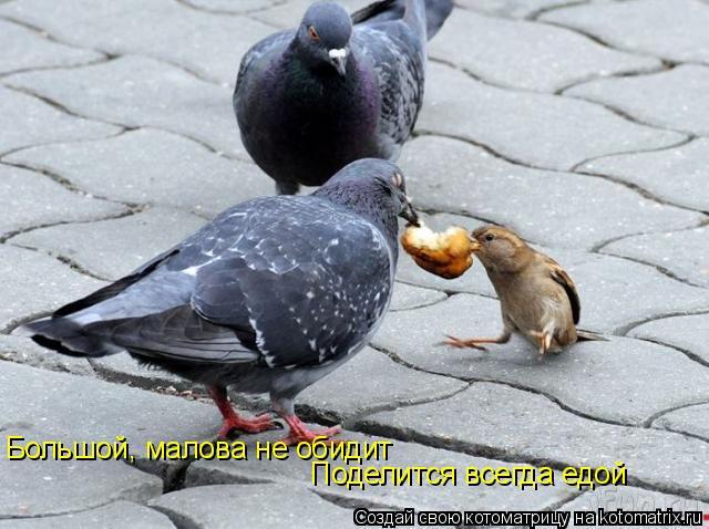 Котоматрица: Большой, малова не обидит Поделится всегда едой