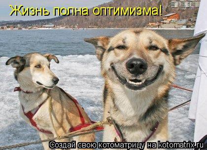 Котоматрица: Жизнь полна оптимизма!