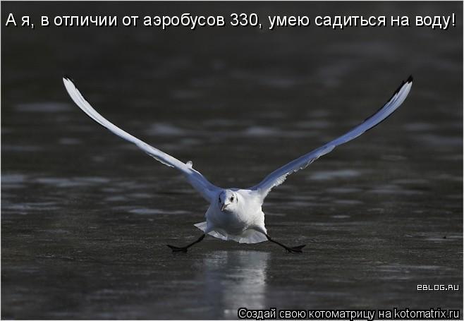 Котоматрица: А я, в отличии от аэробусов 330, умею садиться на воду!