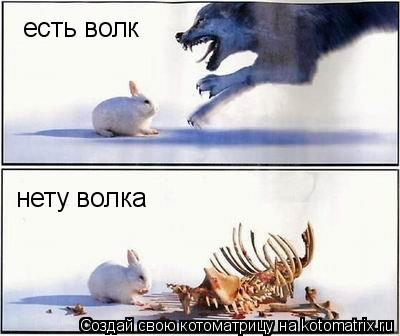 Котоматрица: есть волк нету волка