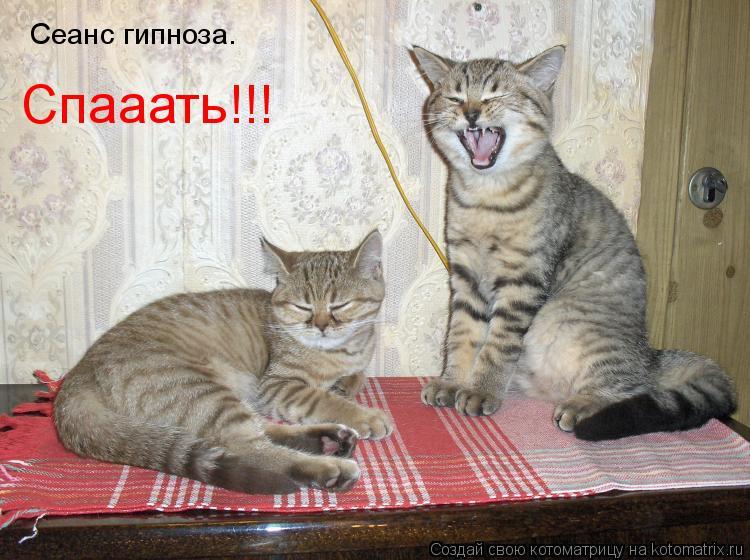 Котоматрица: Сеанс гипноза. Спааать!!!