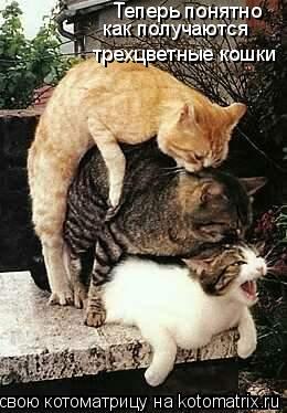 Котоматрица: Теперь понятно как получаются трехцветные кошки