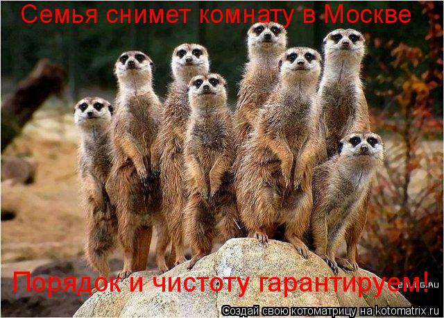 Котоматрица: Семья снимет комнату в Москве Порядок и чистоту гарантируем!