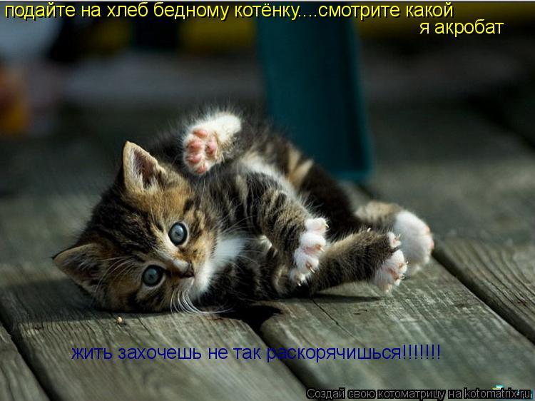 Котоматрица: подайте на хлеб бедному котёнку....смотрите какой я акробат жить захочешь не так раскорячишься!!!!!!!