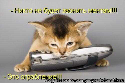 Котоматрица: - Это ограбление!!!  - Никто не будет звонить ментам!!!