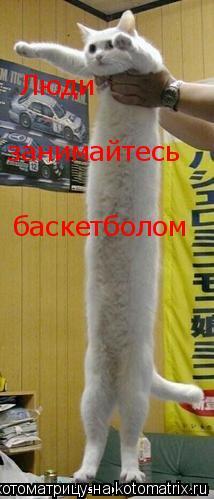 Котоматрица: Люди занимайтесь занимайтесь баскетболом