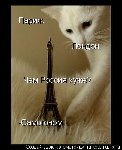 Котоматрица: -Самогоном... Париж, Лондон, Чем Россия хуже?