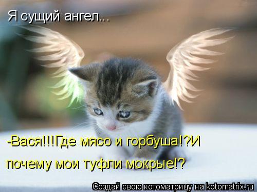 Котоматрица: Я сущий ангел... -Вася!!!Где мясо и горбуша!?И  почему мои туфли мокрые!?