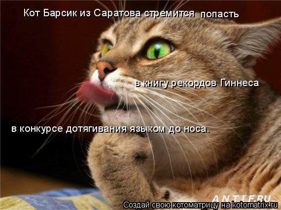 Котоматрица: Кот Барсик из Саратова стремится попасть в книгу рекордов Гиннеса в конкурсе дотягивания языком до носа.