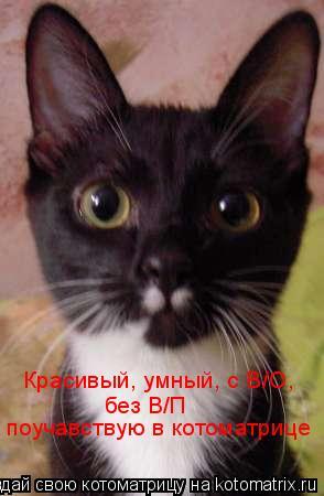 Котоматрица: Красивый, умный, с В/О, без В/П  поучавствую в котоматрице