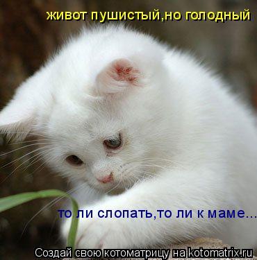 Котоматрица: живот пушистый,но голодный то ли слопать,то ли к маме...