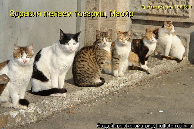 Котоматрица: Здравия желаем товарищ Маойр Братва смотрите ТЕЛКИ!!!