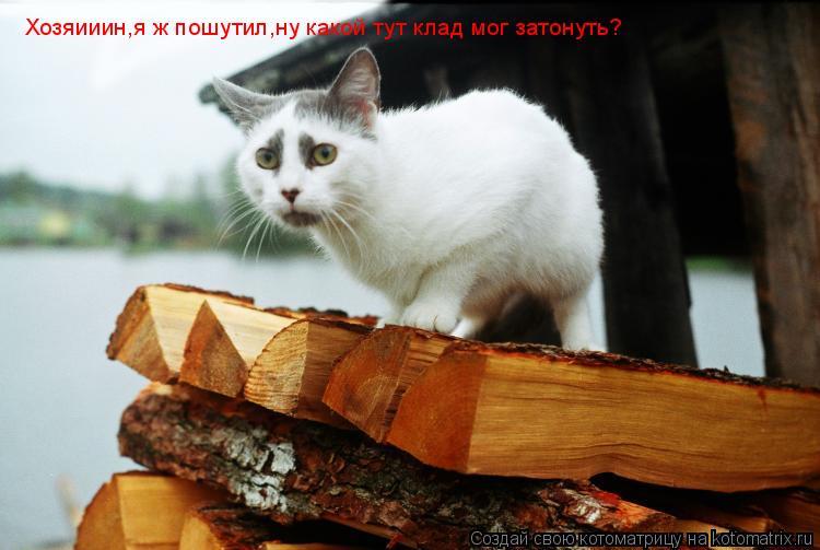 Котоматрица: Хозяииин,я ж пошутил,ну какой тут клад мог затонуть?