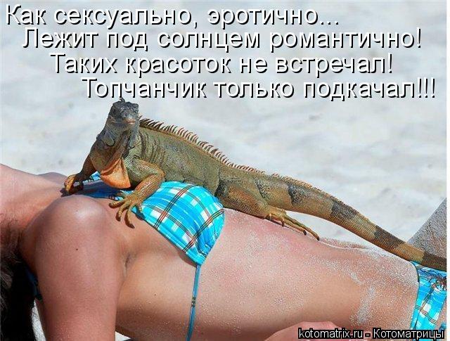 Котоматрица: Как сексуально, эротично... Как сексуально, эротично... Лежит под солнцем романтично! Таких красоток не встречал! Топчанчик только подкачал!!!