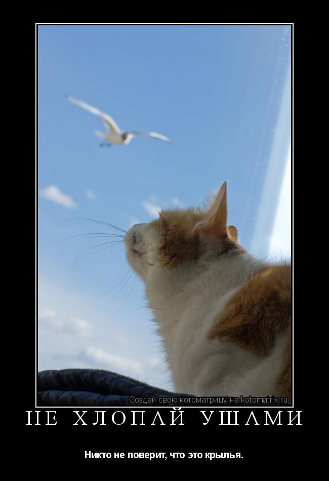 Котоматрица: Не хлопай ушами Никто не поверит, что это крылья.