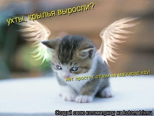 Котоматрица: ухты, крылья выросли? нет. просто с отцом на маскарад иду!