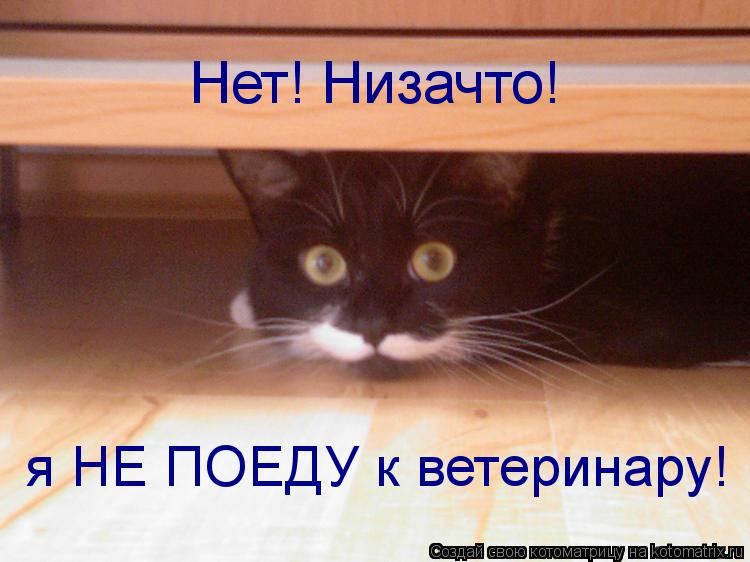 Котоматрица: Нет! Низачто! я НЕ ПОЕДУ к ветеринару!