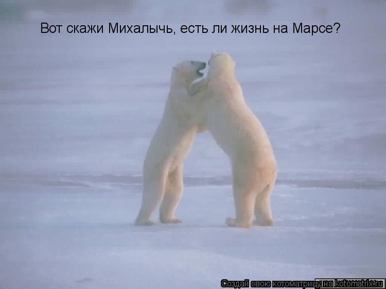 Котоматрица: Вот скажи Михалычь, есть ли жизнь на Марсе?