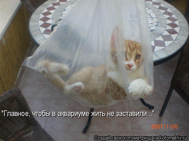 """Котоматрица: """"Главное, чтобы в аквариуме жить не заставили..."""""""