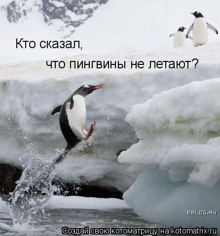Котоматрица: Кто сказал,  что пингвины не летают?