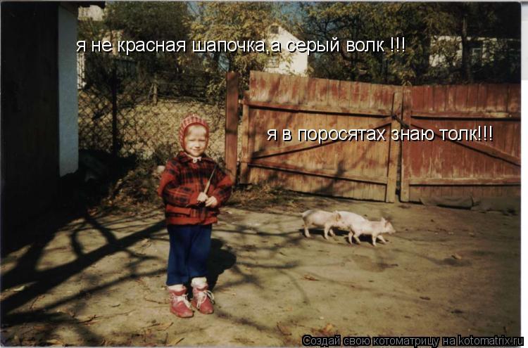 Котоматрица: я не красная шапочка,а серый волк !!! я в поросятах знаю толк!!!