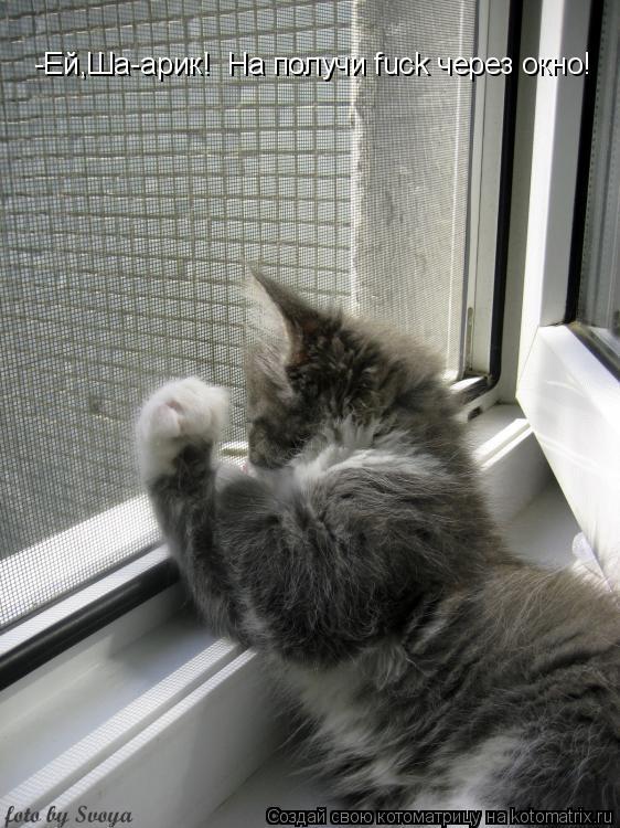 Котоматрица: -Ей,Ша-арик!  На получи fuck через окно! -Ей,Ша-арик!  На получи fuck через окно!