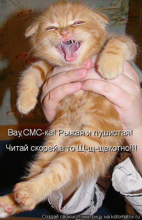 Котоматрица: Вау,СМС-ка! Рыжая и пушистая! Читай скорей,а то Щ-щ-щекотно!!!