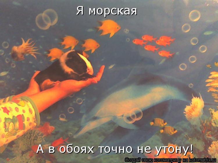 Котоматрица: Я морская А в обоях точно не утону!