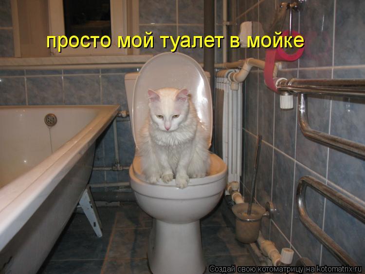 Котоматрица: просто мой туалет в мойке