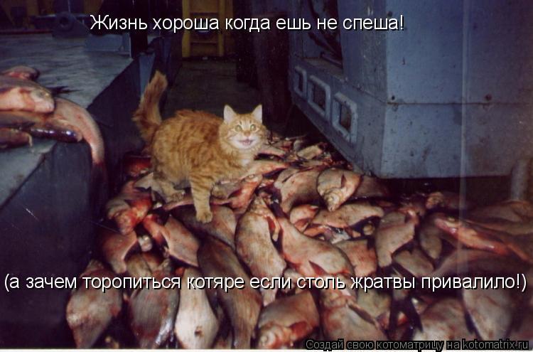 Котоматрица: Жизнь хороша когда ешь не спеша! (а зачем торопиться котяре если столь жратвы привалило!)