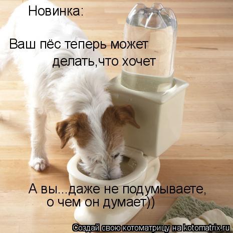 Котоматрица: Новинка: Ваш пёс теперь может делать,что хочет А вы...даже не подумываете,  о чем он думает))