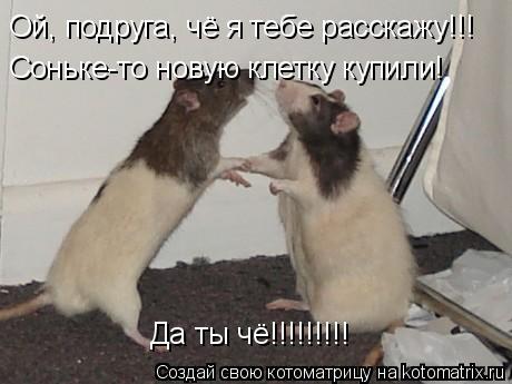 Котоматрица: Ой, подруга, чё я тебе расскажу!!! Соньке-то новую клетку купили! Да ты чё!!!!!!!!!