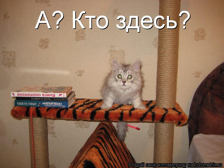 Котоматрица: А? Кто здесь?