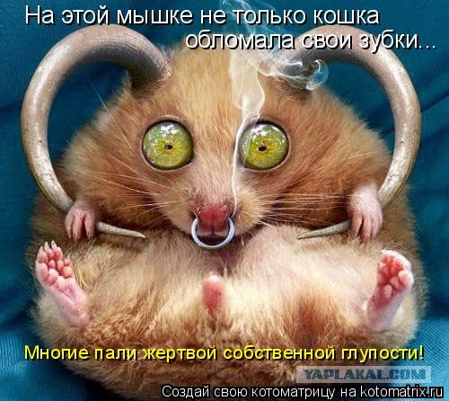 Котоматрица: На этой мышке не только кошка обломала свои зубки... Многие пали жертвой собственной глупости!