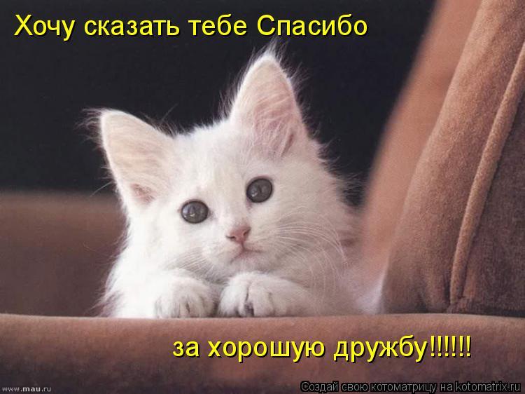 Котоматрица: Хочу сказать тебе Спасибо за хорошую дружбу!!!!!!