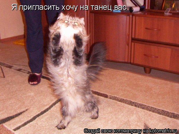 Котоматрица: Я пригласить хочу на танец вас