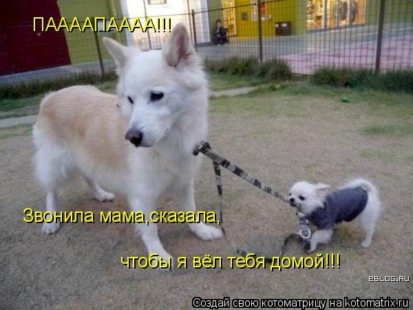 Котоматрица: ПААААПАААА!!! Звонила мама,сказала, чтобы я вёл тебя домой!!!