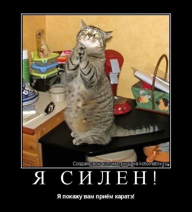 Котоматрица: Я силён! Я покажу вам приём каратэ!
