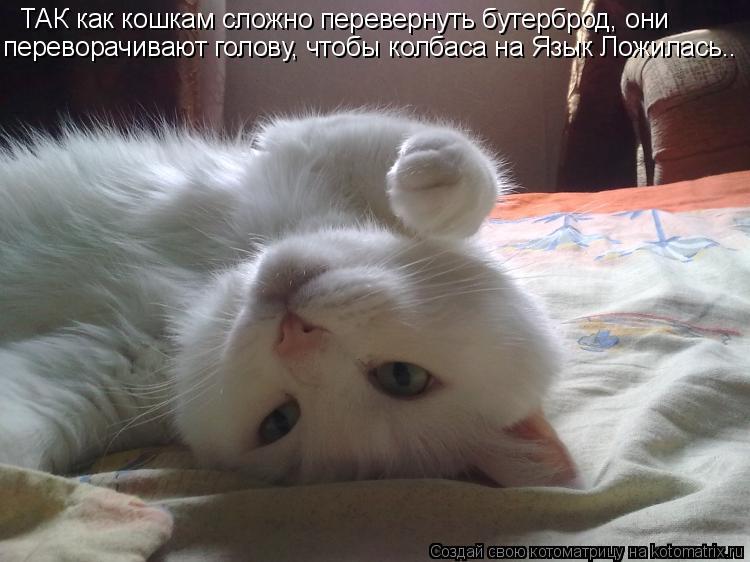 Котоматрица: ТАК как кошкам сложно перевернуть бутерброд, они переворачивают голову, чтобы колбаса на Язык Ложилась..