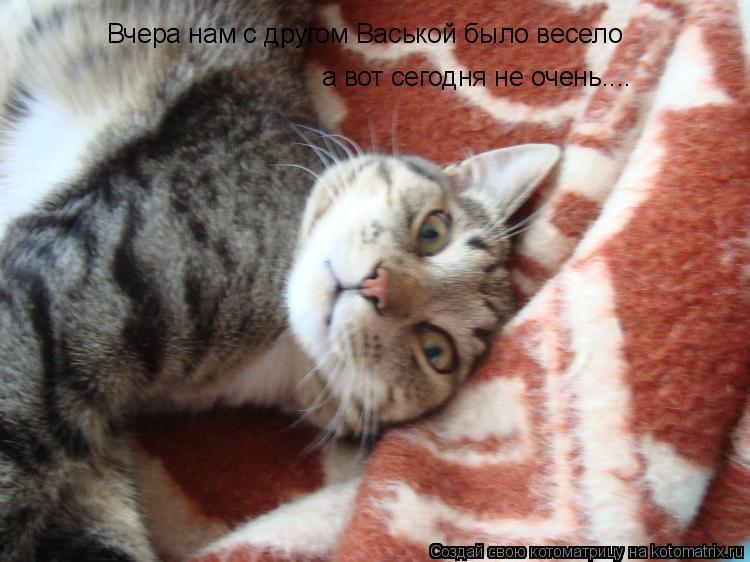 Котоматрица: Вчера нам с другом Васькой было весело а вот сегодня не очень....