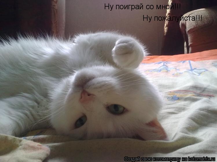 Котоматрица: Ну пожалуйста!!! Ну поиграй со мной!!!