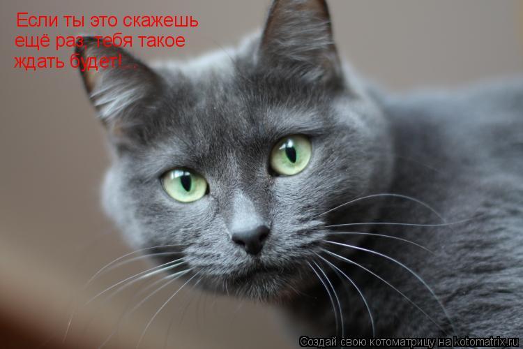 Котоматрица: Если ты это скажешь ещё раз, тебя такое ещё раз, тебя такое ещё раз, тебя такое ждать будет!...