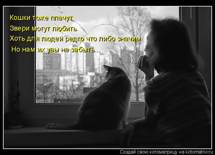 Котоматрица: Кошки тоже плачут. Звери могут любить. Хоть для людей редко что либо значим Но нам их увы не забыть…..
